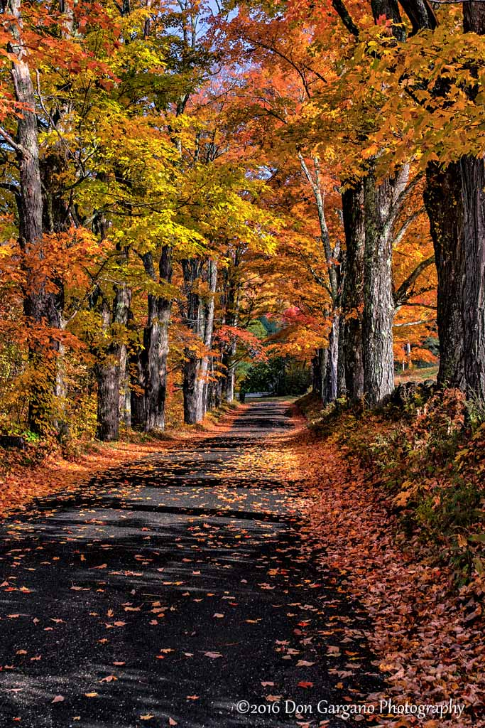 Country Autumn Road-10-17-01cr .jpg