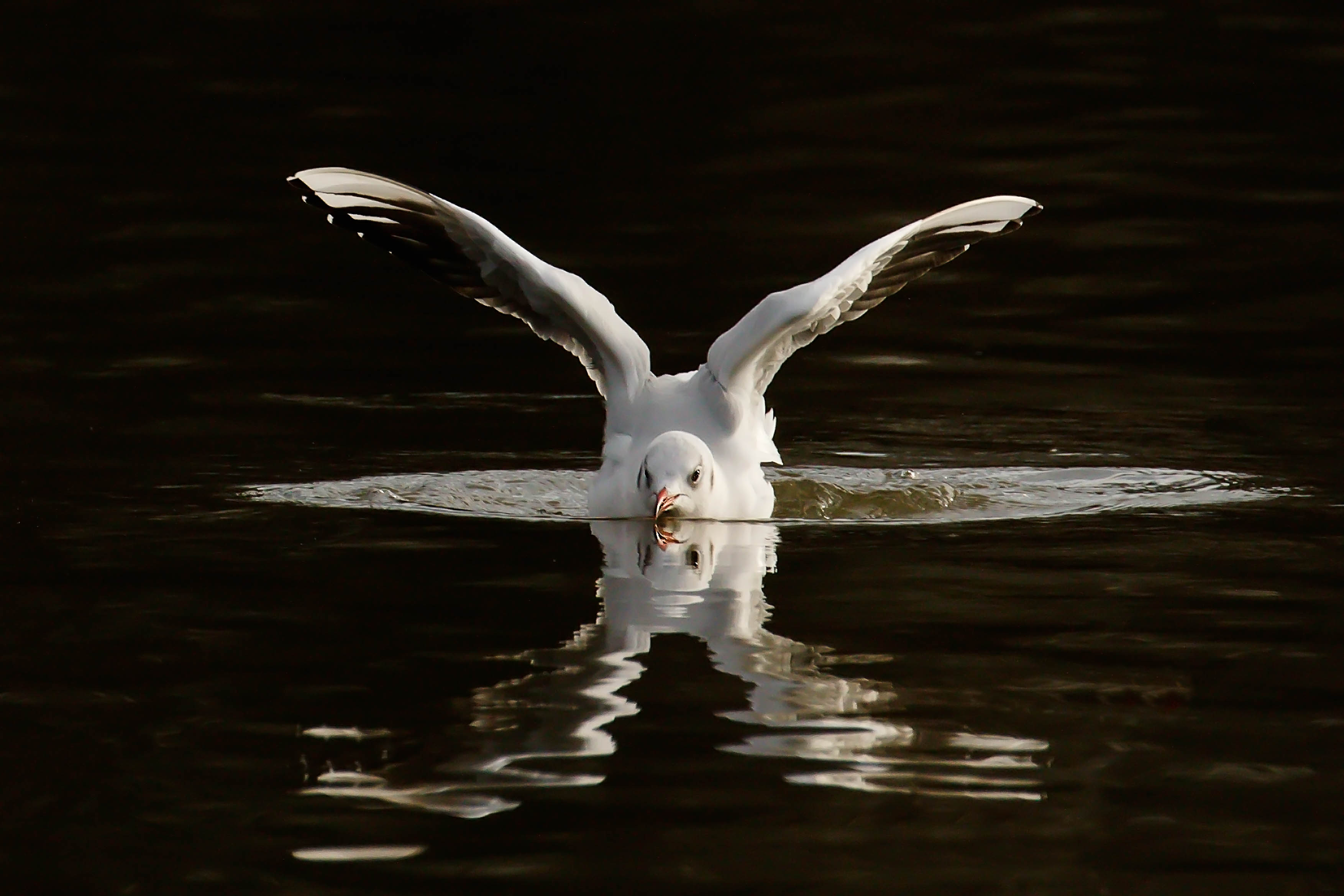 Egrets-56-Edit-2.jpg