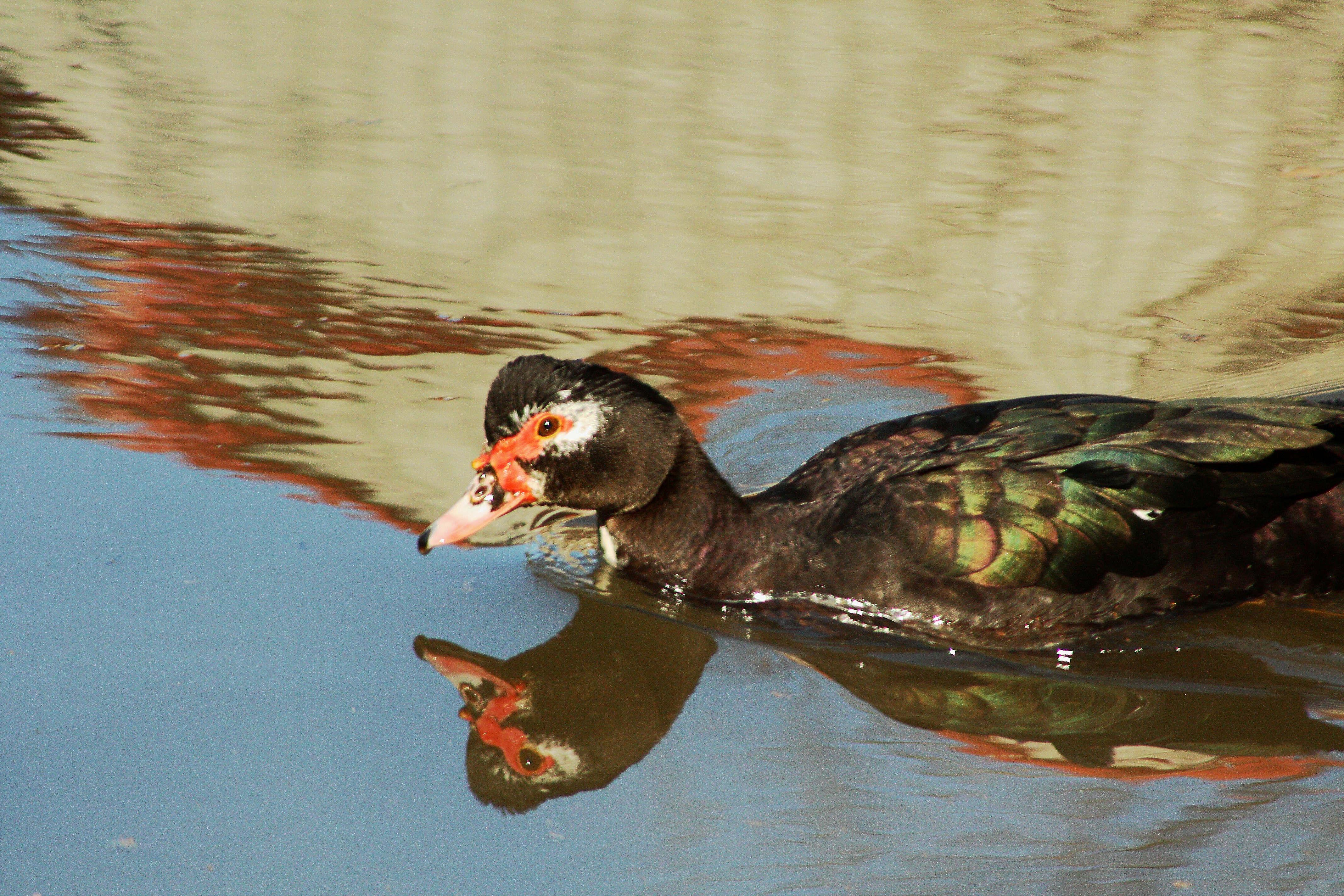 IMG_7423_Ducks.jpg