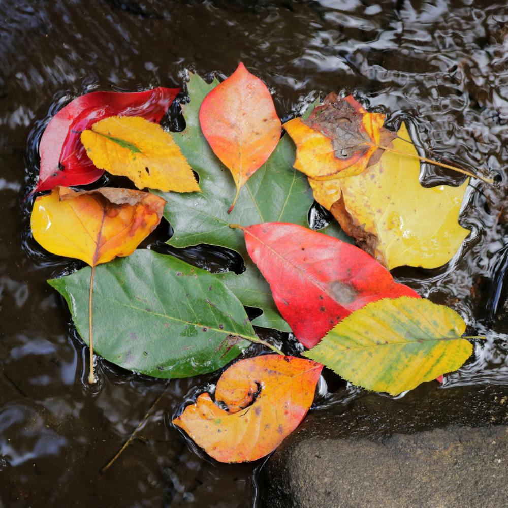 Colorful Fall Leaves.jpg