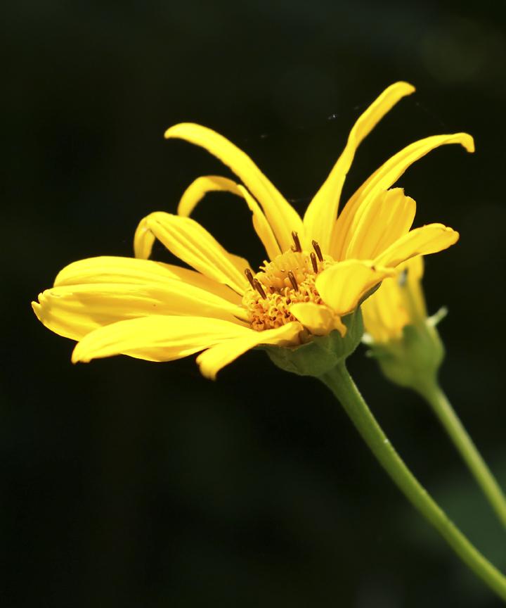 IMG_Small Yellow Flower.jpg