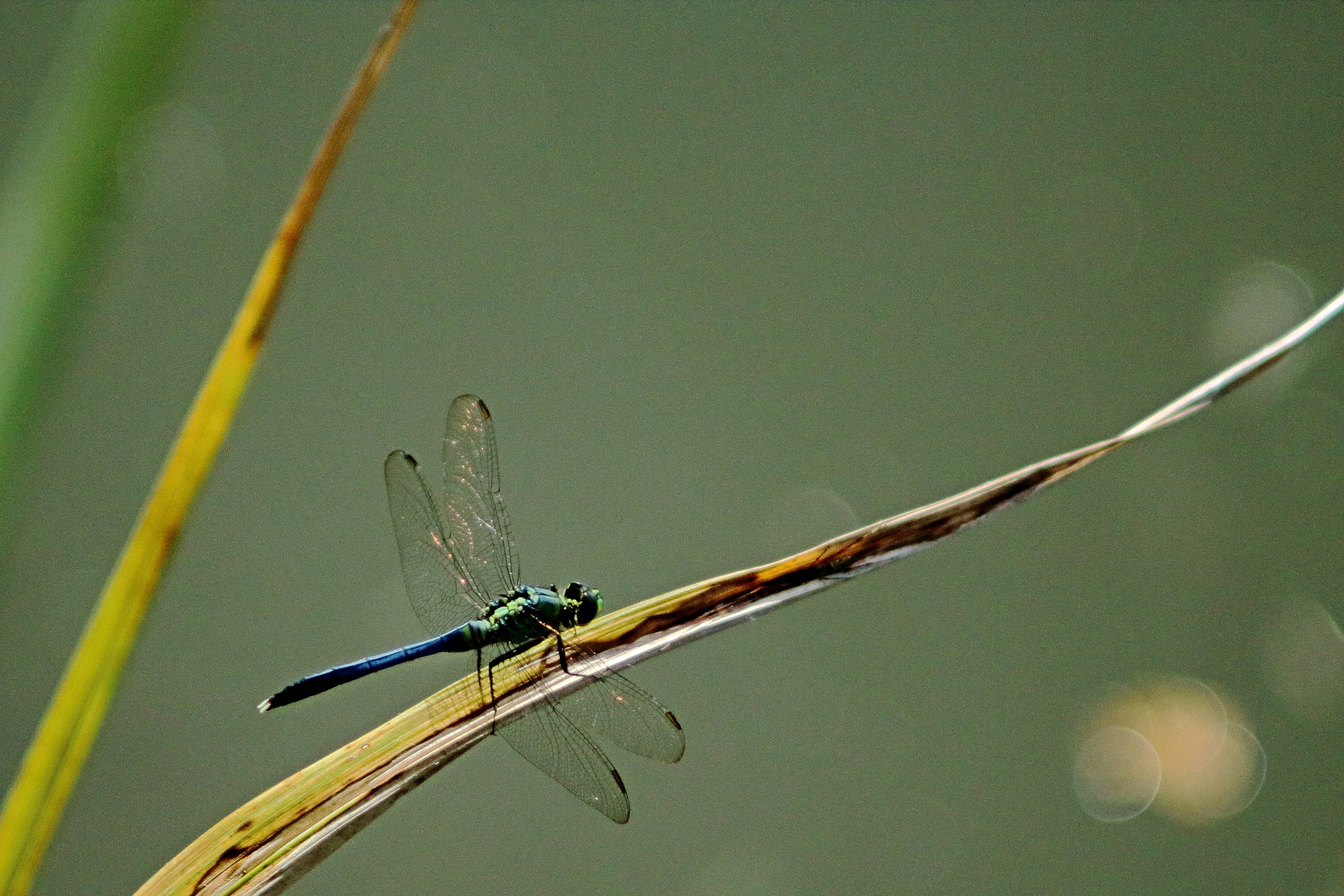 IMG_2887_Dragonfly.jpg