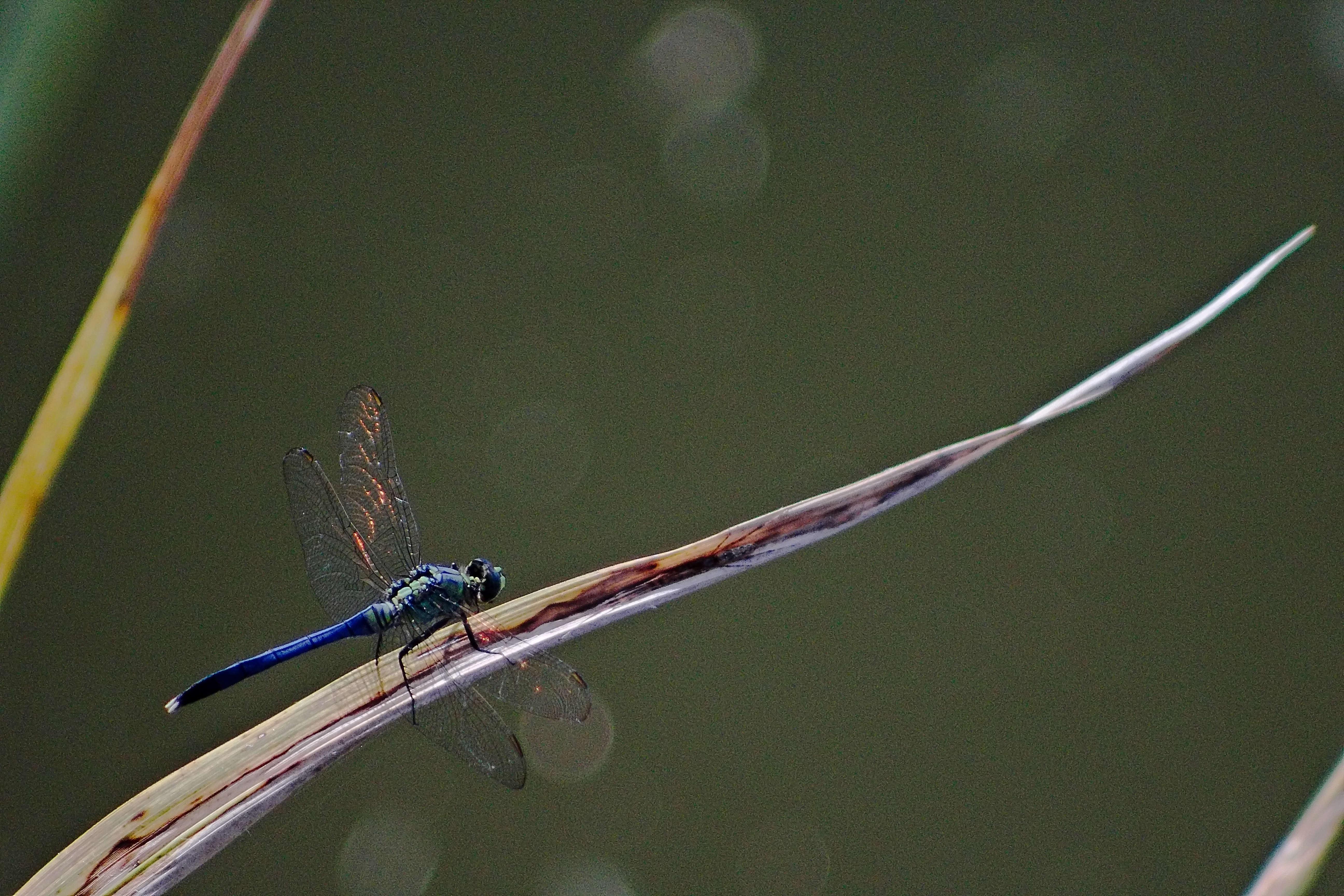 IMG_2885_v1_Dragonfly.jpg