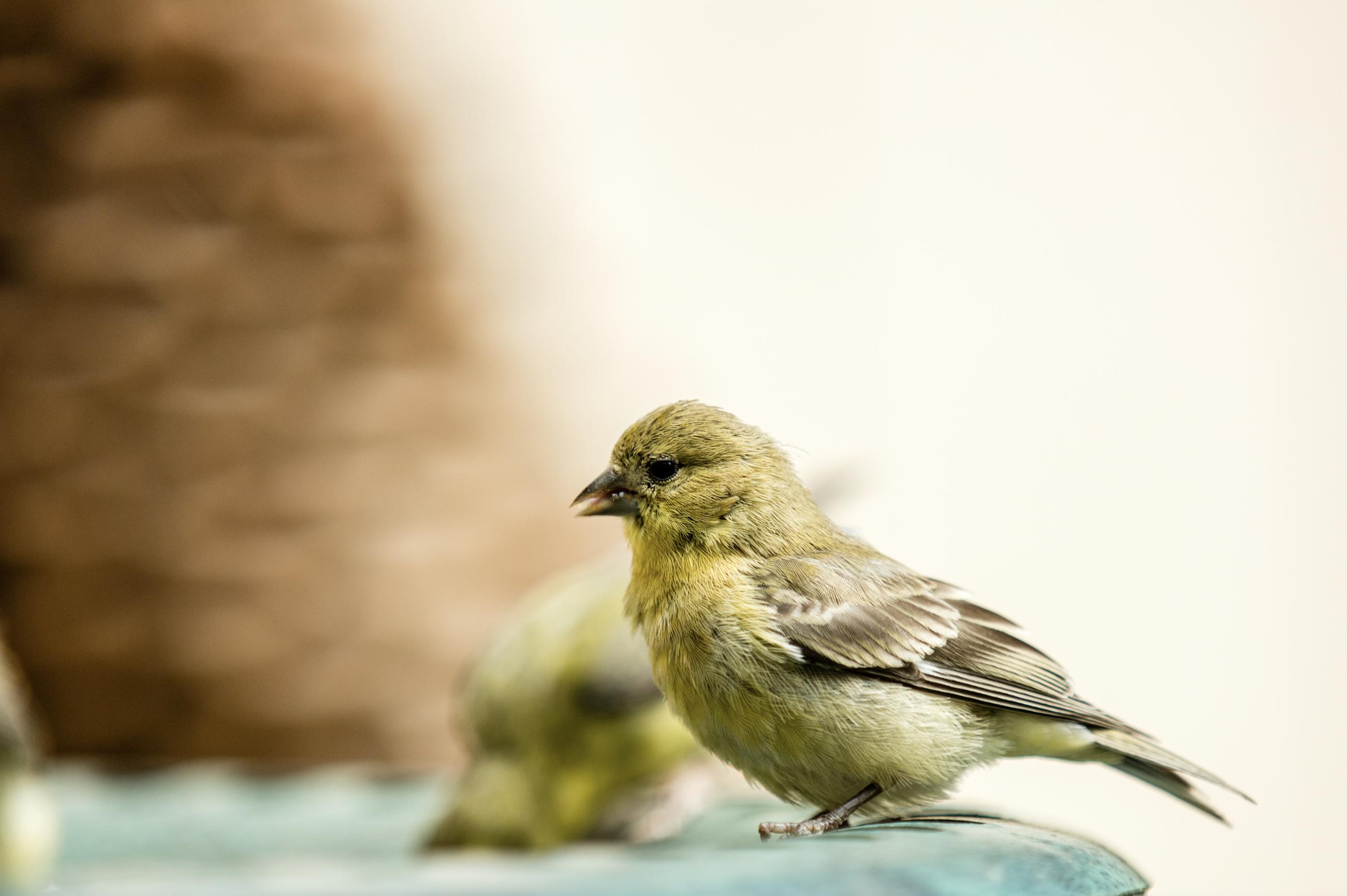 bird taking a bath.jpg
