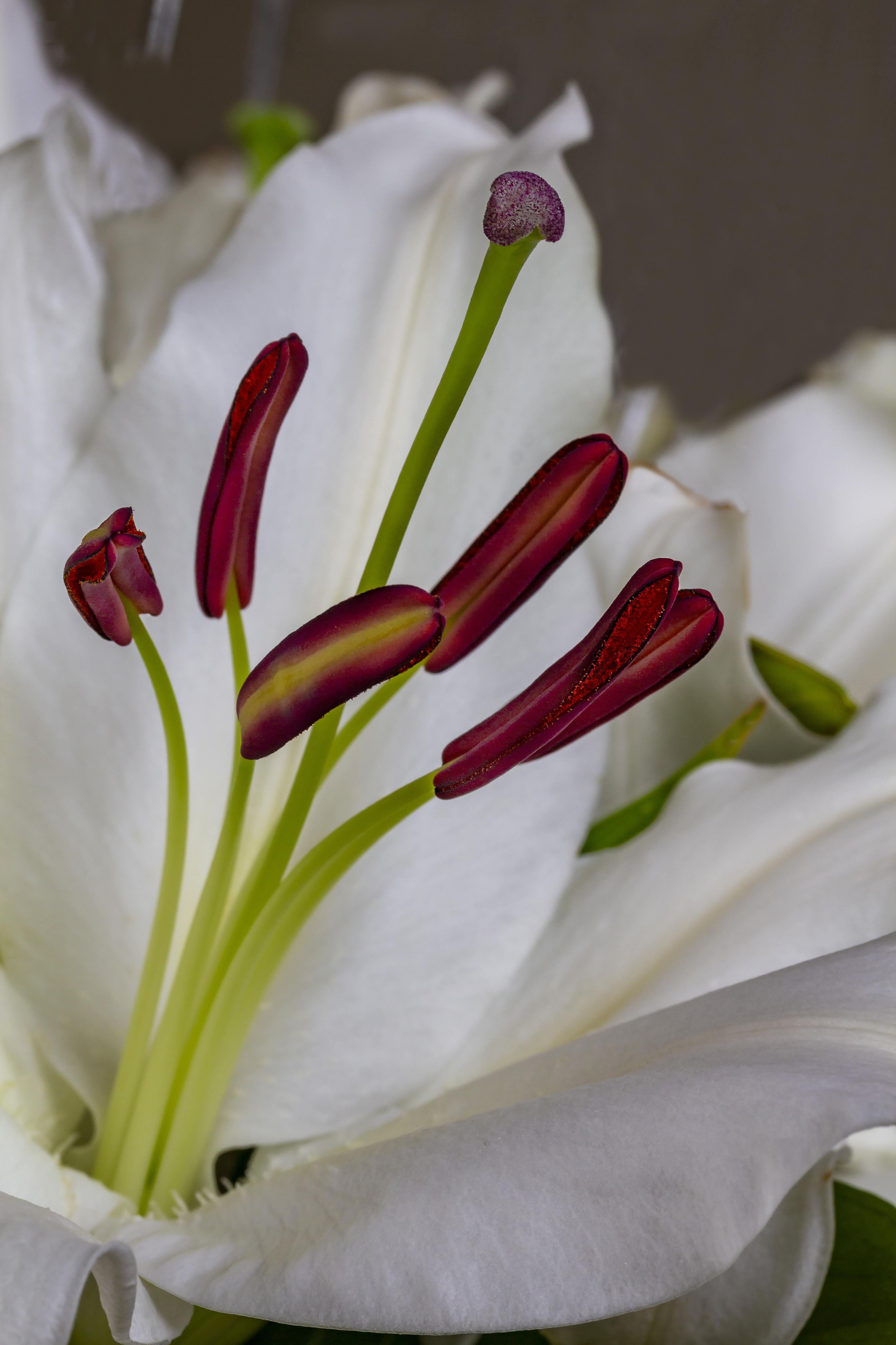 Flower 03 LR.jpg