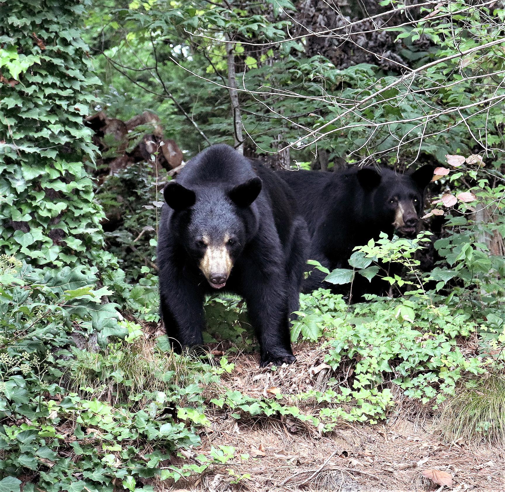 Bears15.JPG