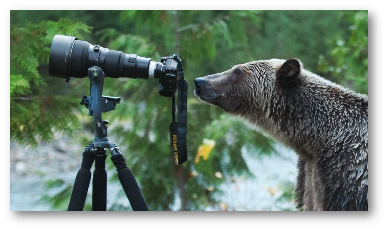 bear with camera.jpg