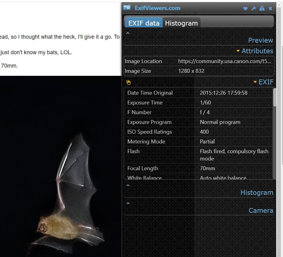 BATS EXIF.jpg