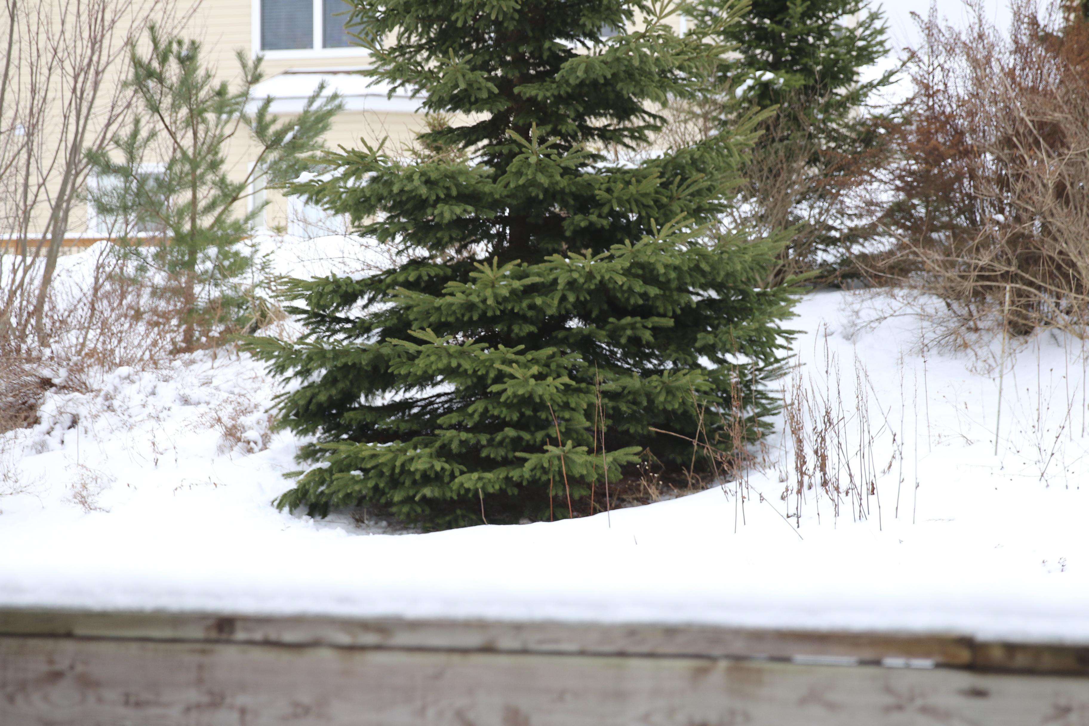 treetest.jpg