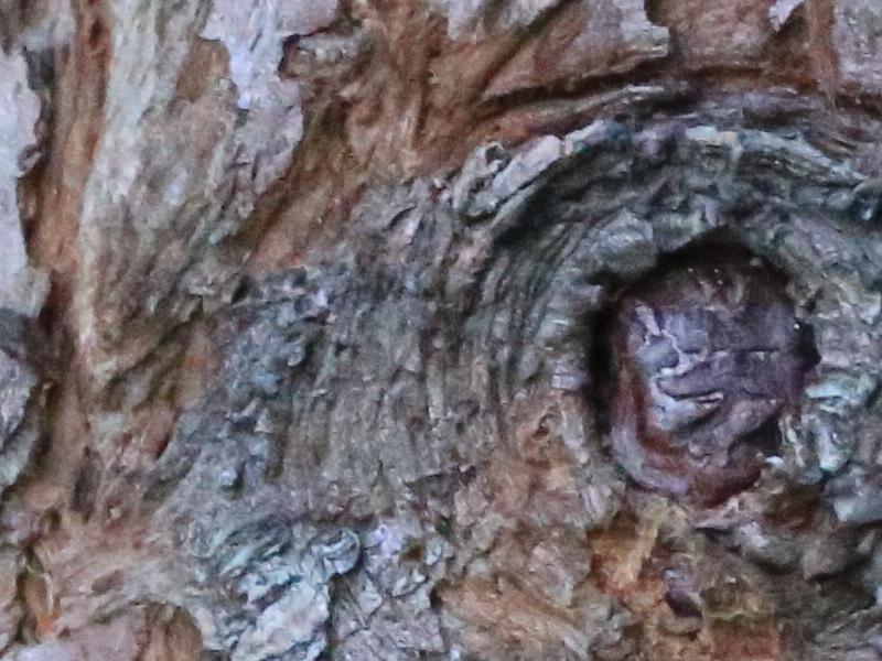 treebark1.JPG