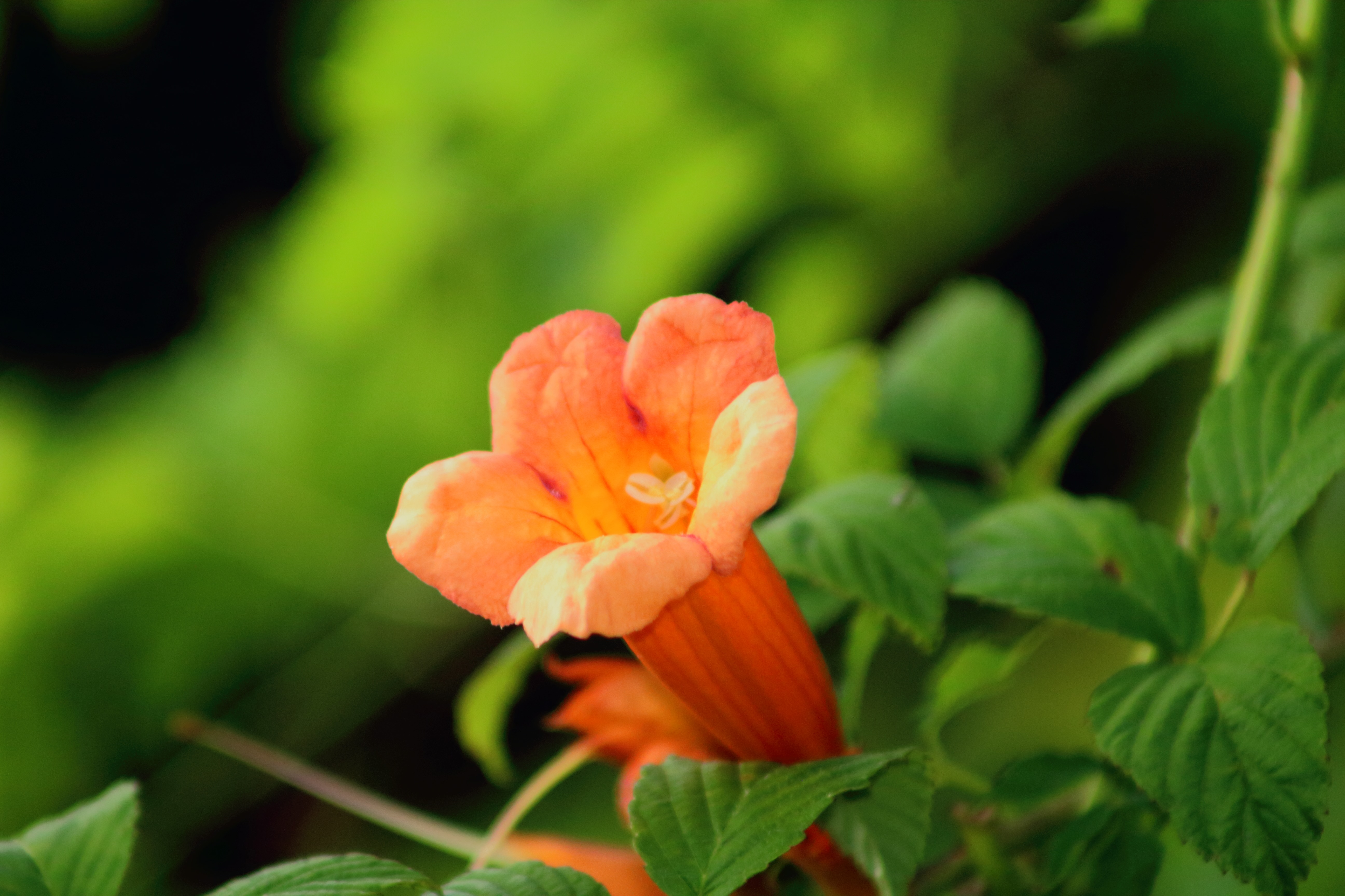 IMG_0446_Nature.jpg