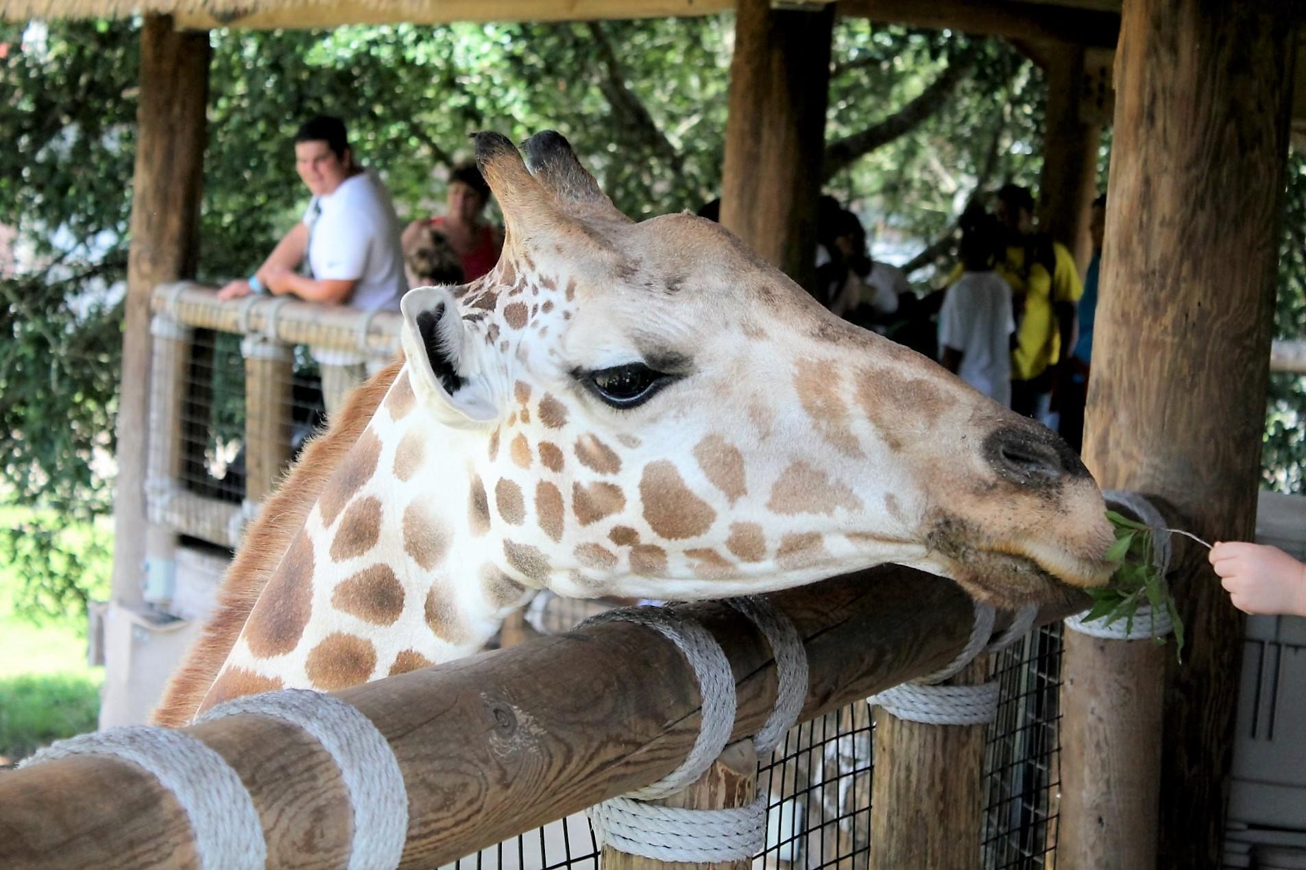 Jax Zoo 2016 053.JPG