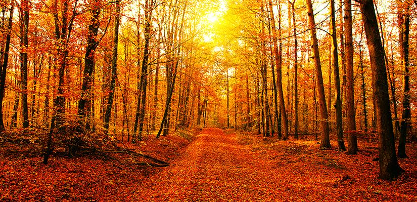 Fall_Forum.jpg