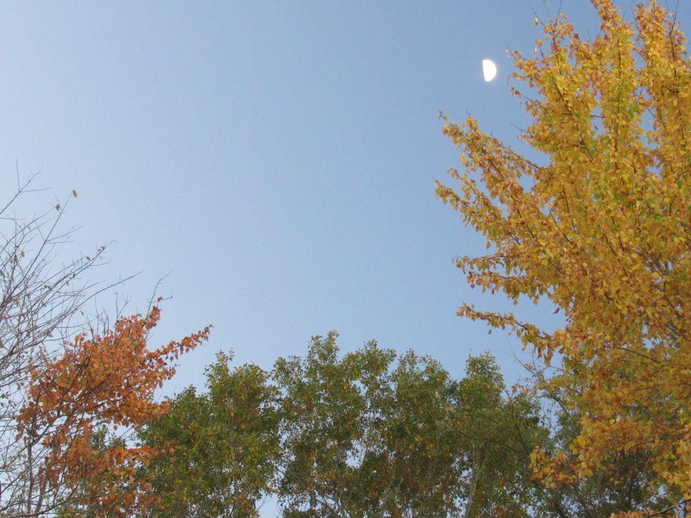 Blue sky, moon, fall colors--IMG_2816 (2).JPG