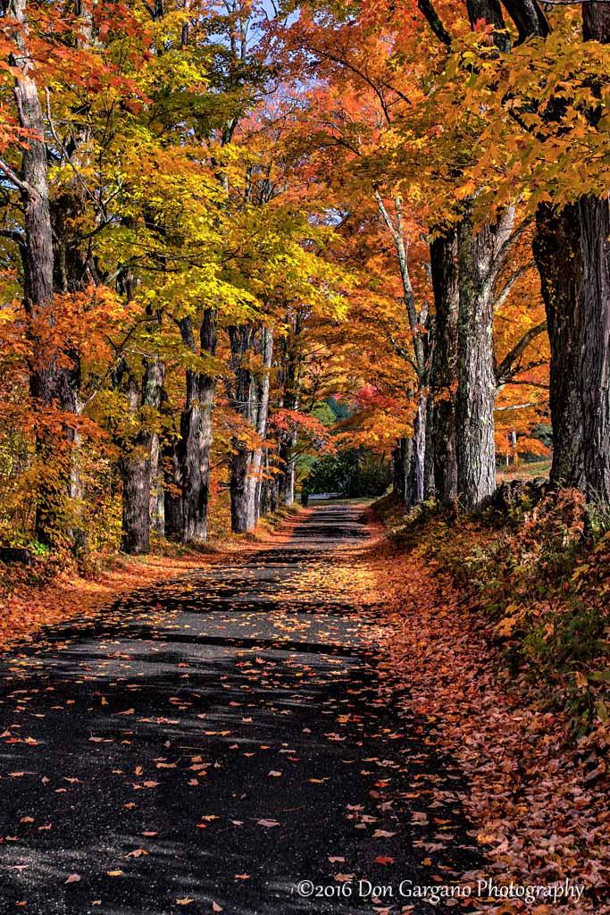 Country Autumn Road-10-17-01cr .jpg