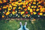 Forum_Flowers.jpg