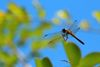 IMG_1072_Dragonfly.jpg