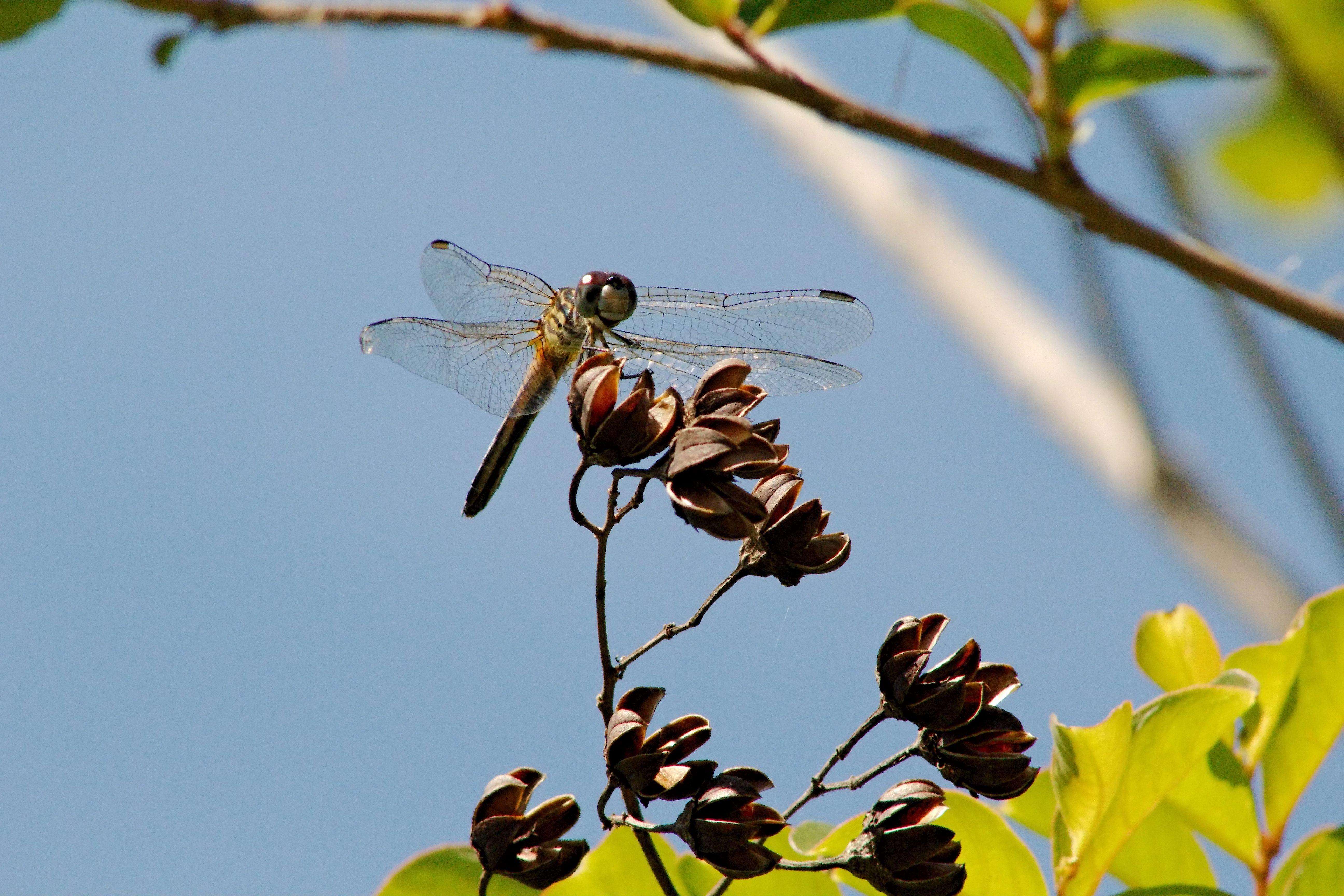 IMG_1068_v2_Dragonfly.jpg