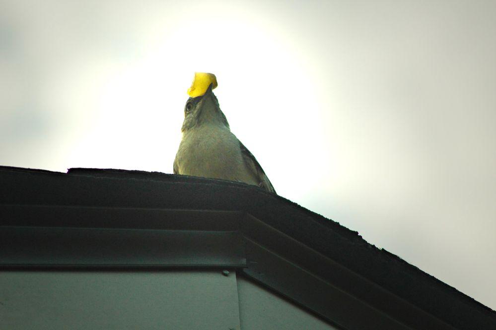 IMG_1202_v2B Mockingbirds.jpg