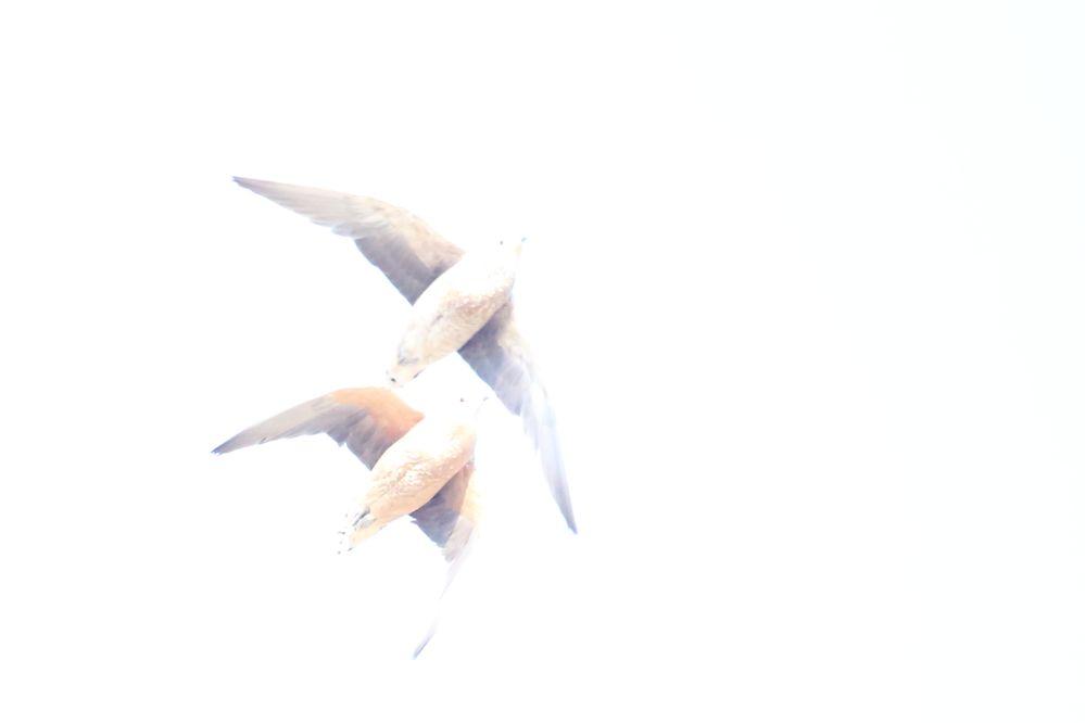 _MG_1892Kgalagadi 06_17.JPG