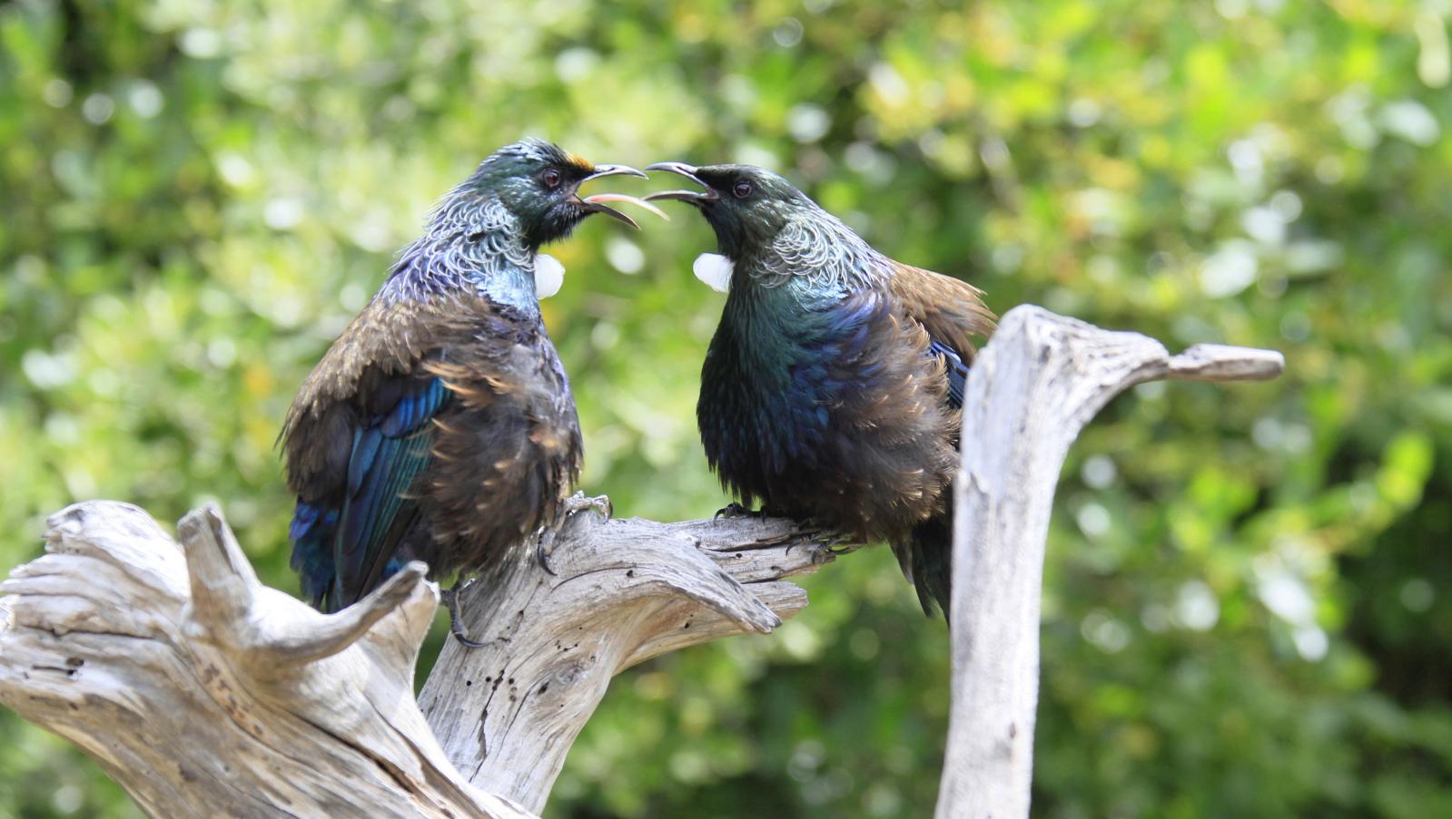 Bird 06a.jpg
