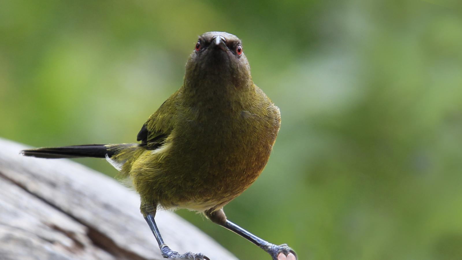 bird 09.jpg