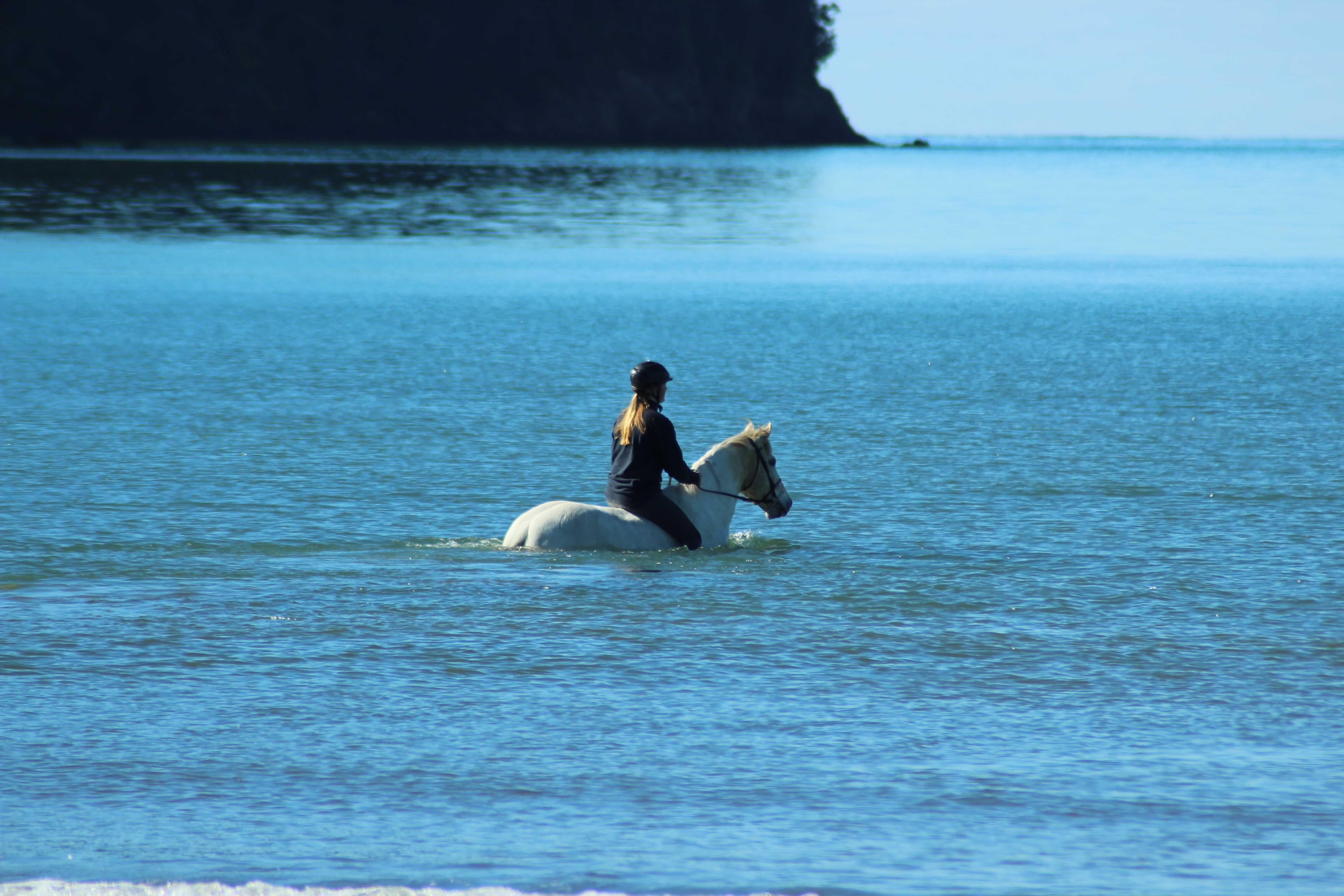 Horse (6).jpg