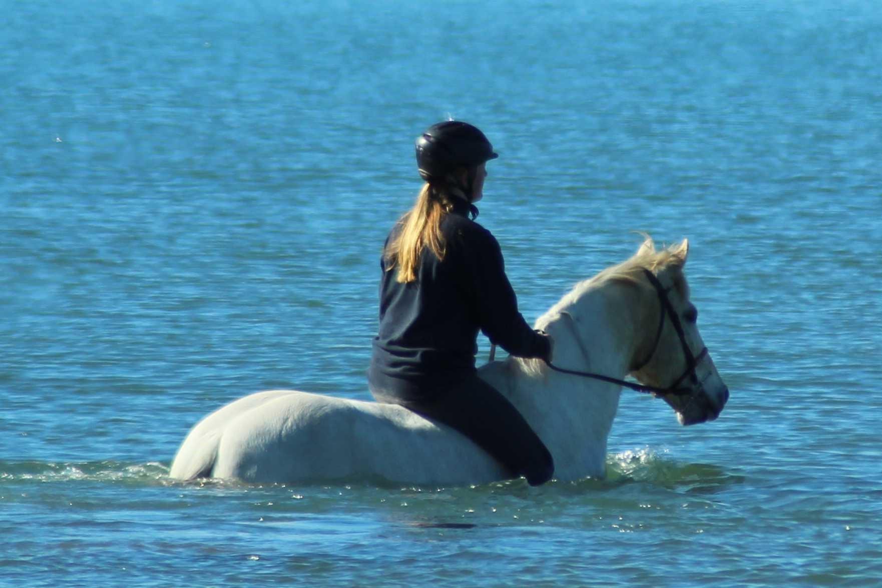 Horse (6) 2.jpg