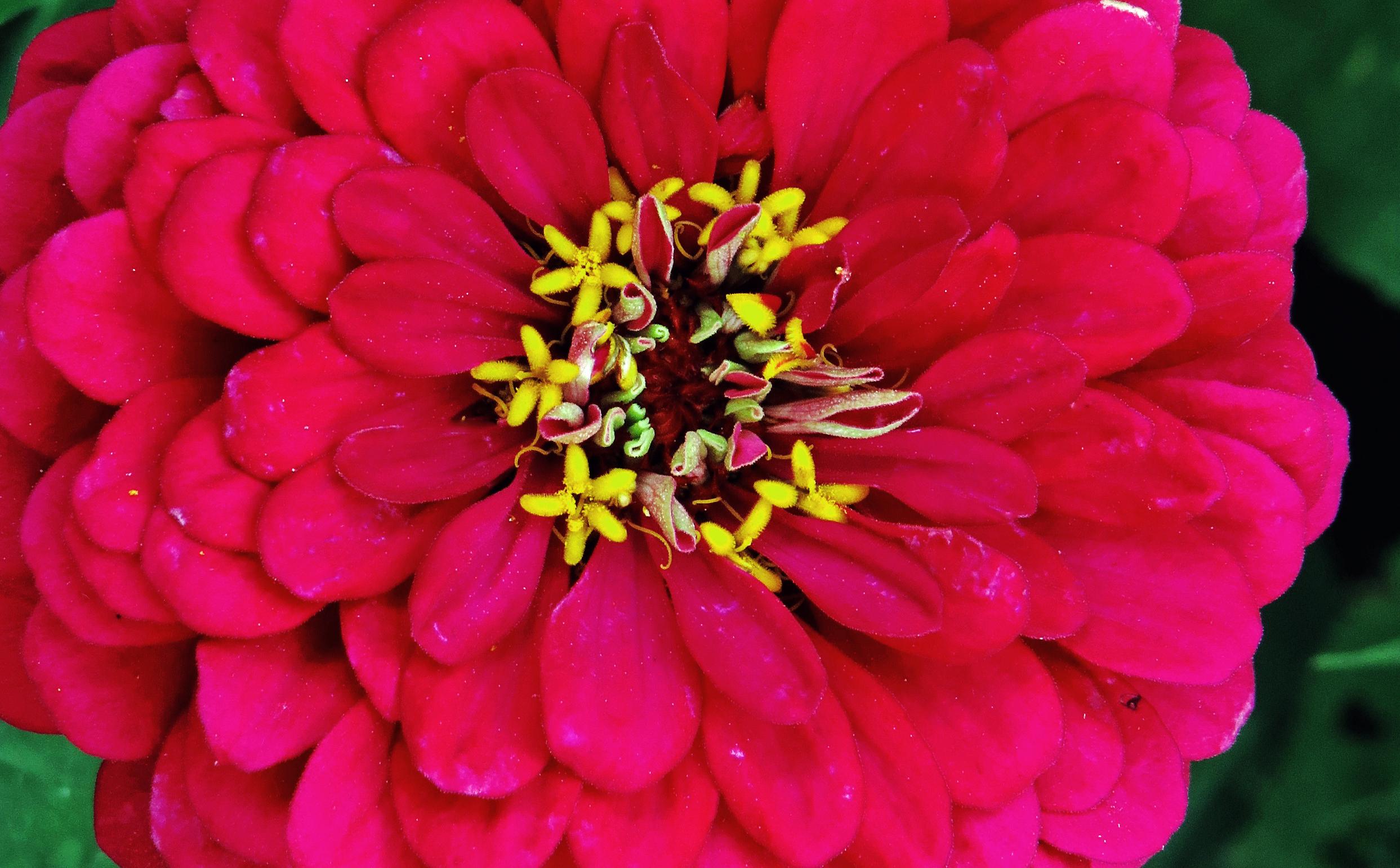 NZ Auckland Flower (2).jpg