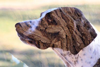 dogwood (2).JPG
