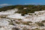IMG_1848_Henderson Beach State Park.jpg