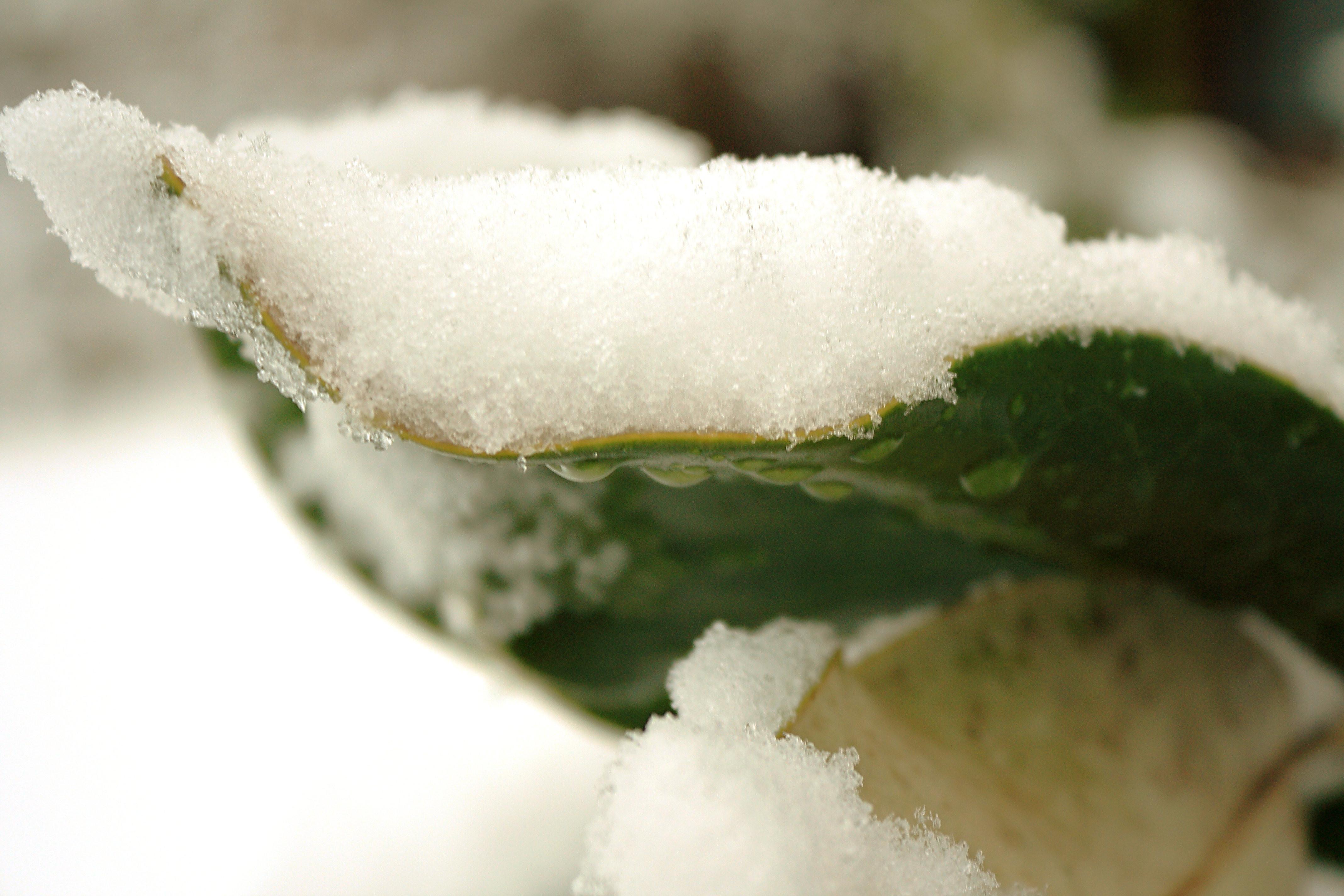 IMG_7166_Snow.jpg