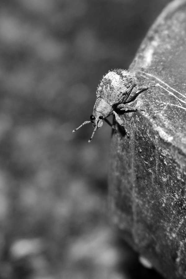 IMG_Tiny Insect on a Bolt Final (WEB).jpg