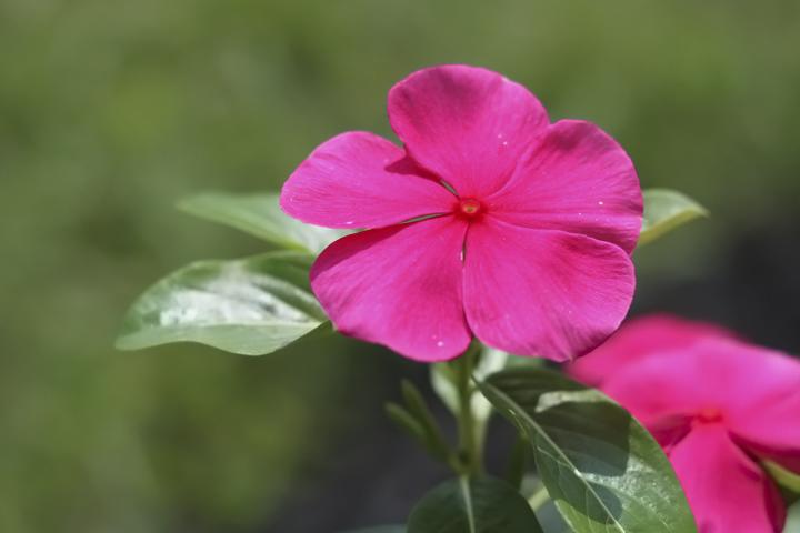 IMG_Pink Flower.jpg