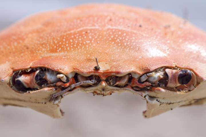 IMG_Crab Inside Its Shell.jpg