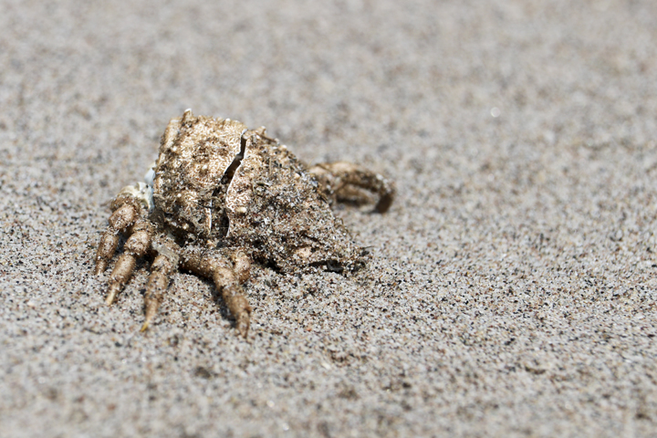 IMG_Crab Blending in with the Sand.jpg