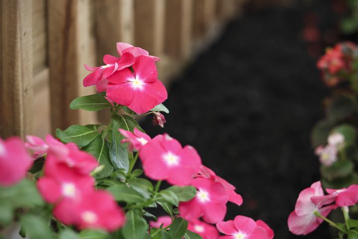 IMG_Pink Flower Foliage.jpg