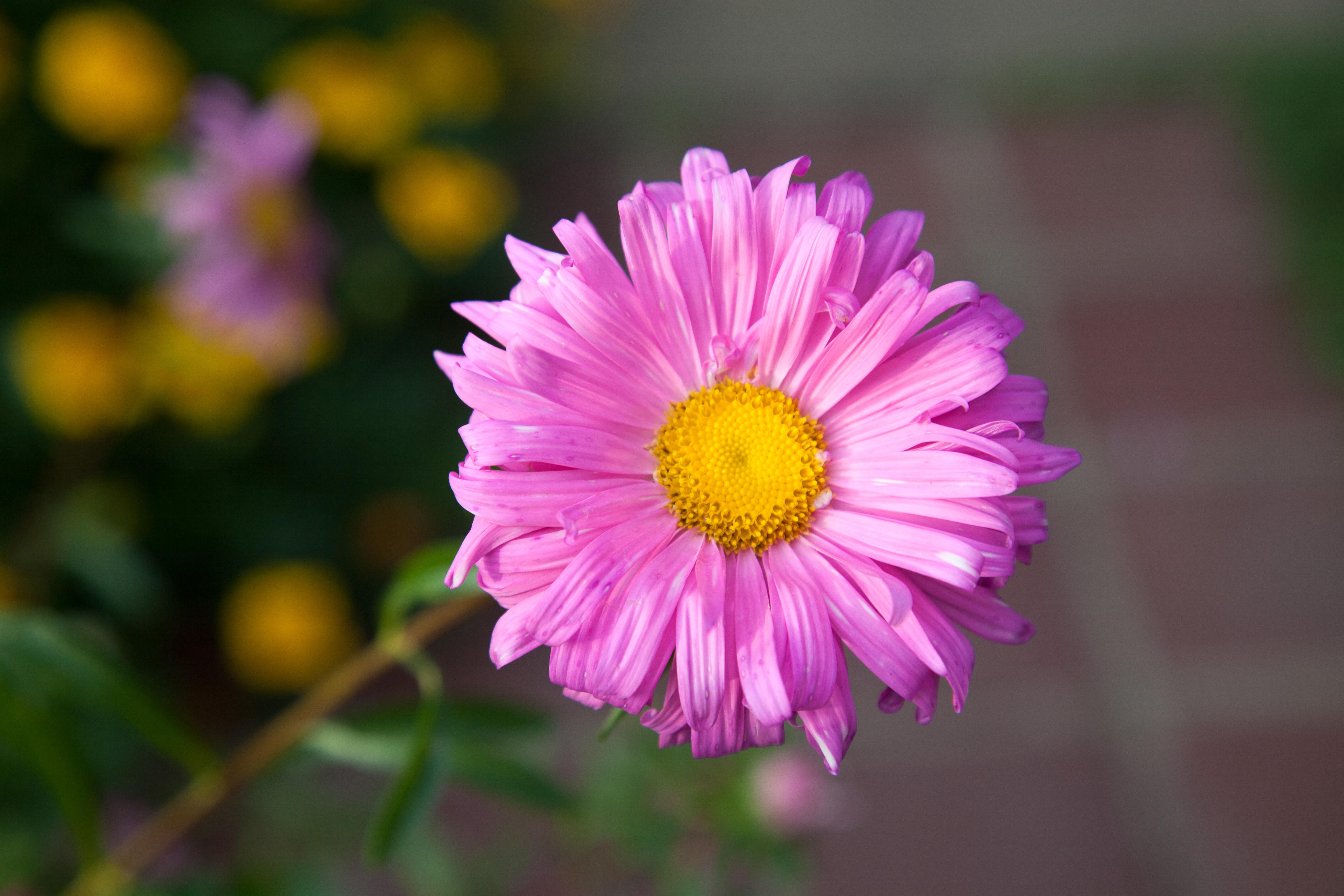 Flower 5D mark II.jpg