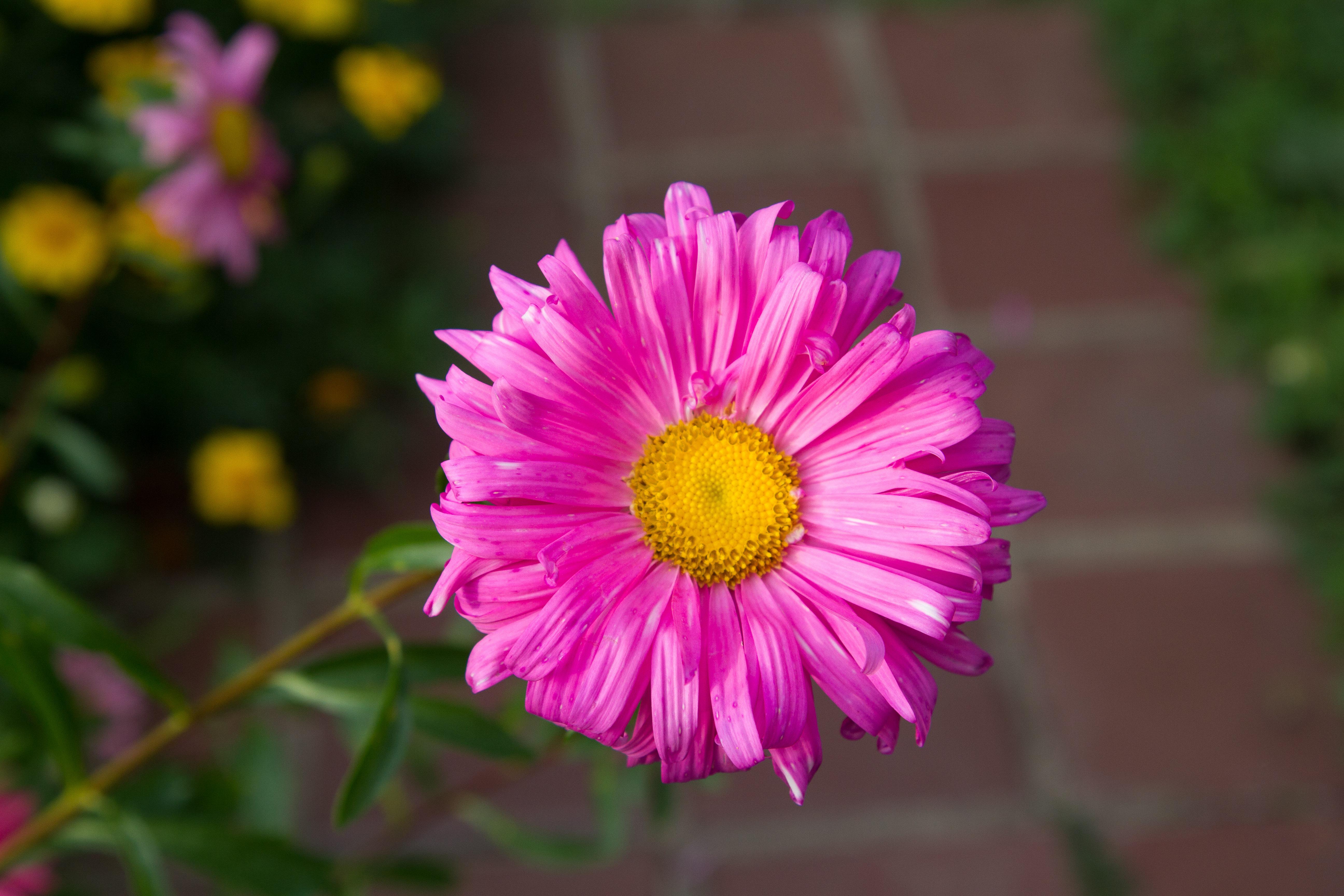 Flower 7D.jpg