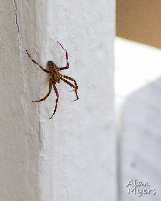 Spider on fence post