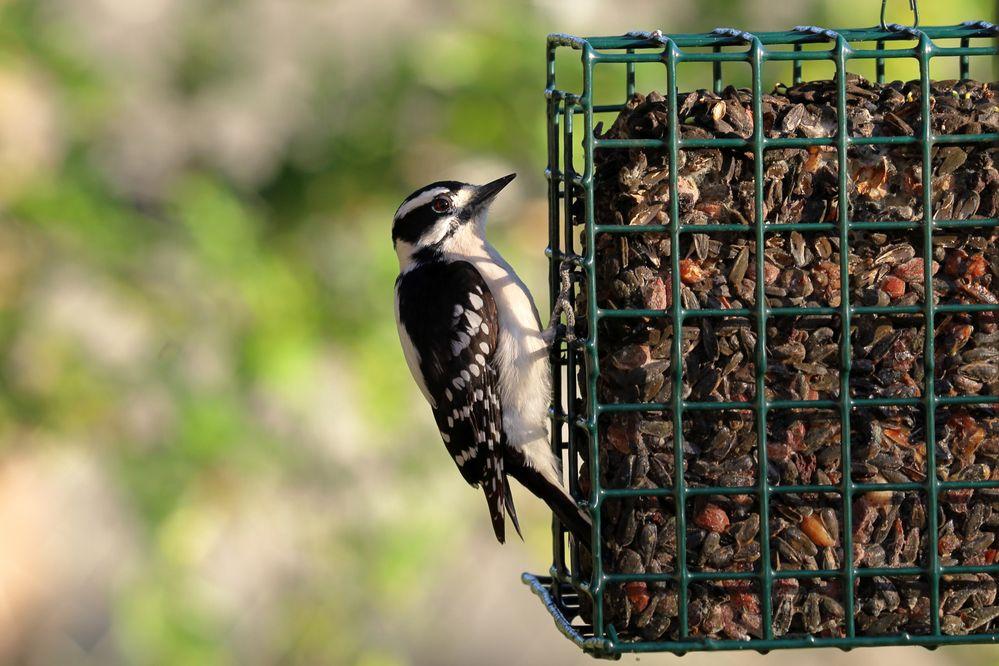 BirdsIMG_7502.JPG