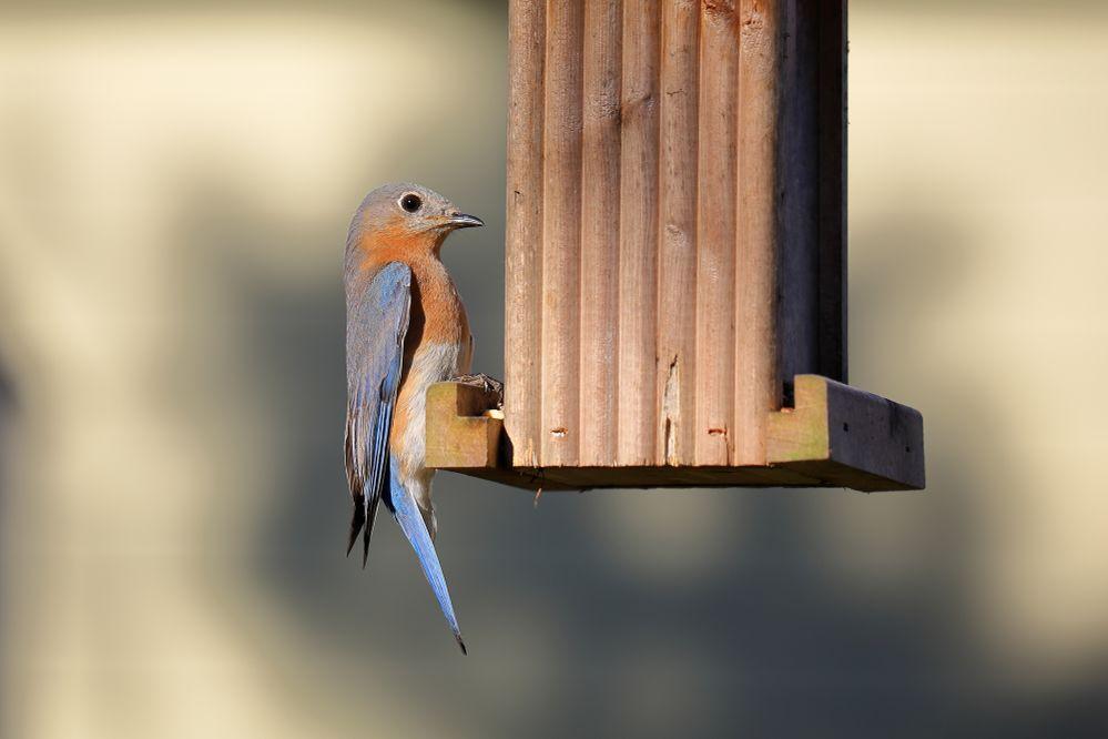 BirdsIMG_7641.JPG