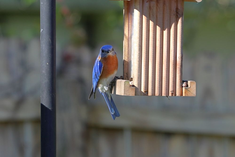 BirdsIMG_7572.JPG