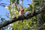 BirdsIMG_7582.JPG