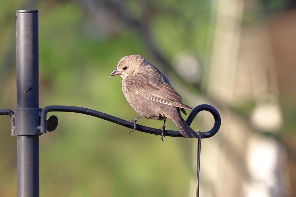 BirdsIMG_7548.JPG