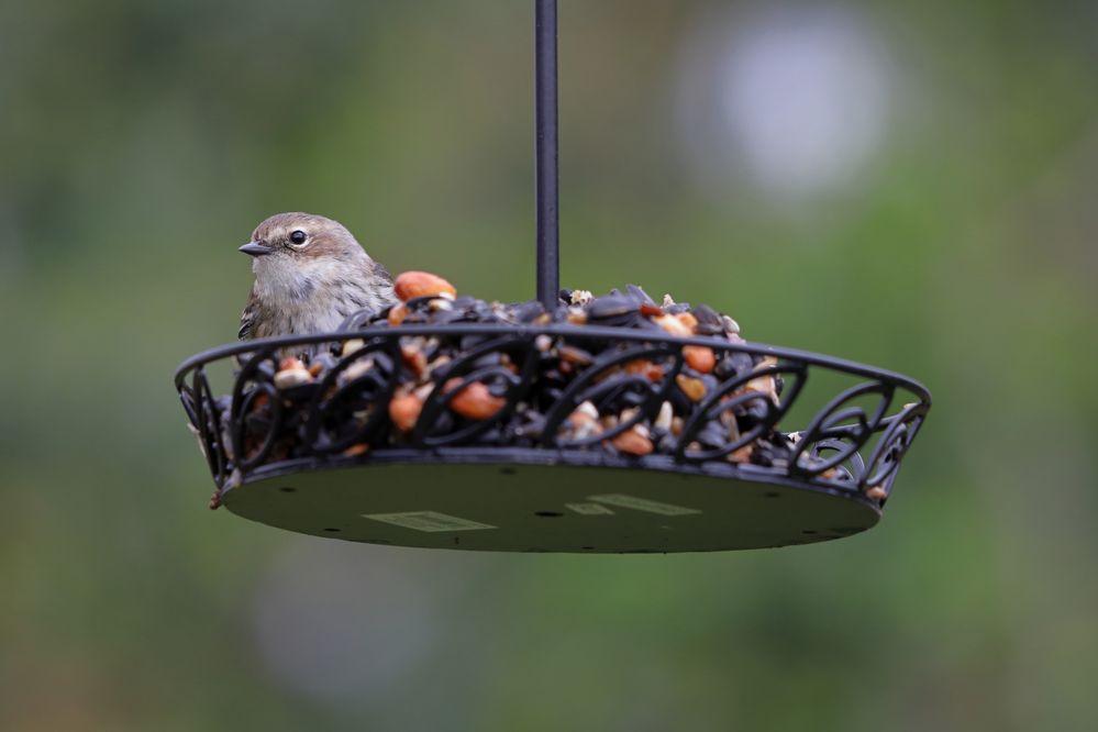 BirdsIMG_7159.JPG