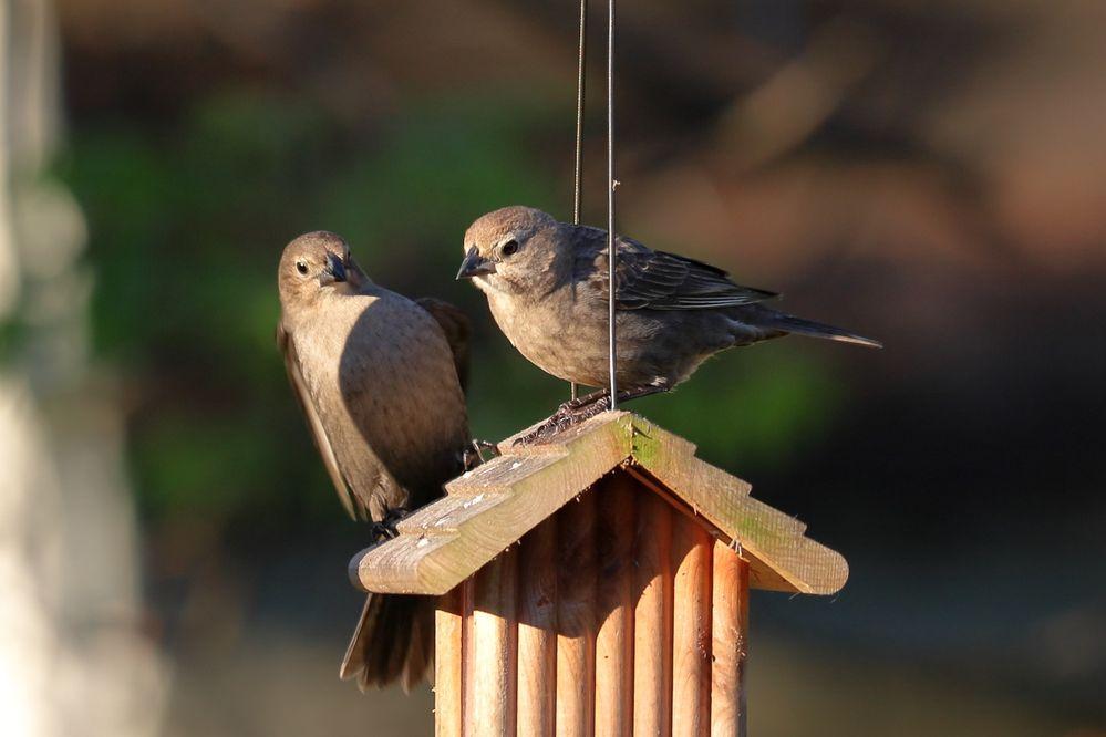 BirdsIMG_7538.JPG