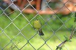 BirdsIMG_7551.JPG