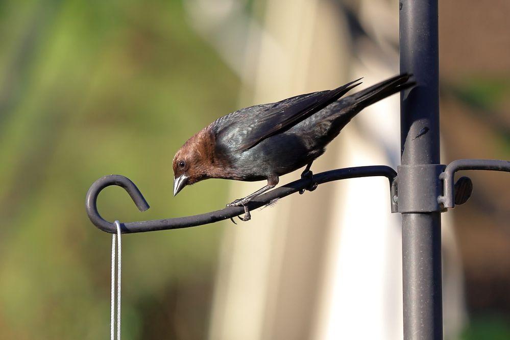 BirdsIMG_7535.JPG