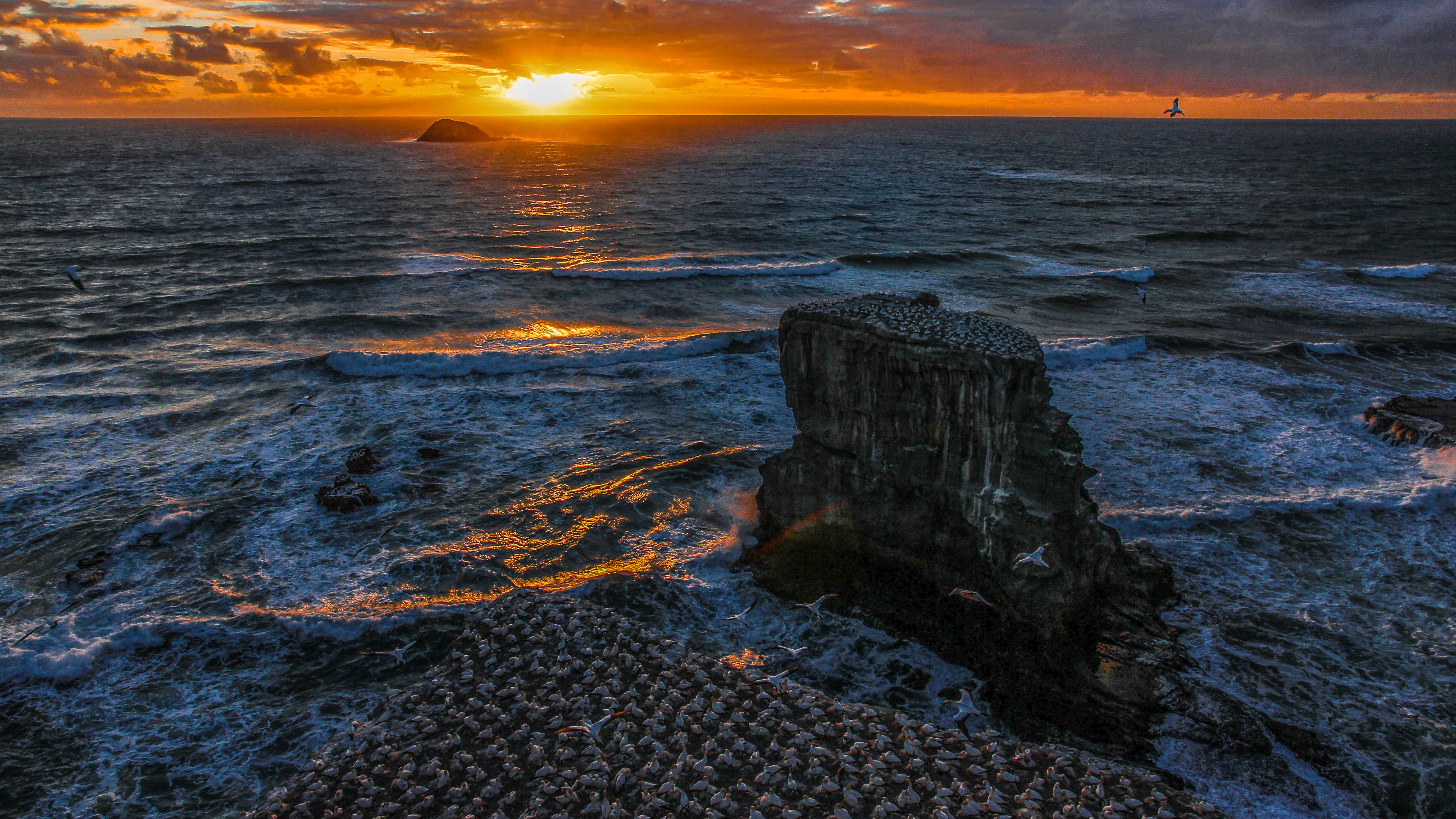 NZ Auckland Muriwai Gannet Colony Sunset 07-1 (2).jpg